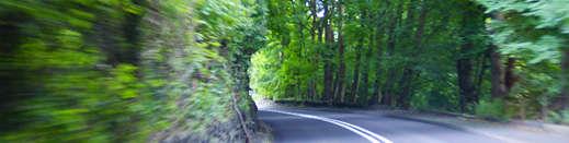 billede af vej, der skærer igennem frodig natur